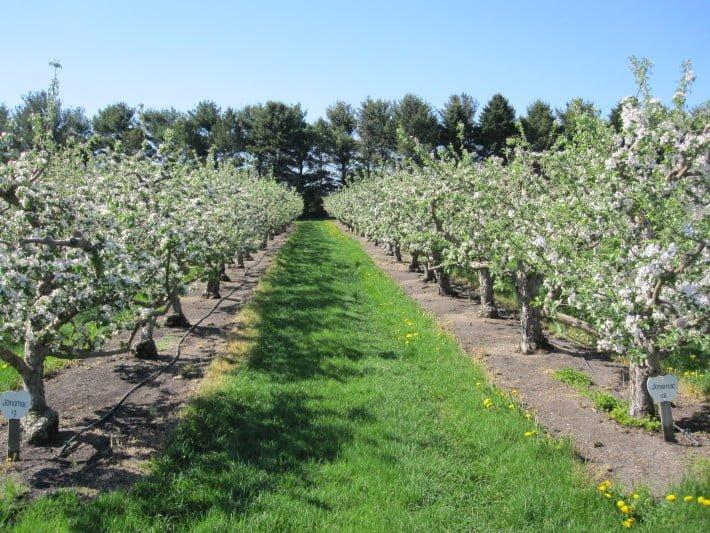 Jonamac Orchard in Illinois Apple Picking